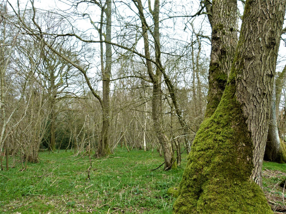 Hazel Wood, near New Alresford, Hampshire. 11.08 acres of lofty broadleaf woodland with roadside access, 11 miles from Winchester. £149,500 (freehold)