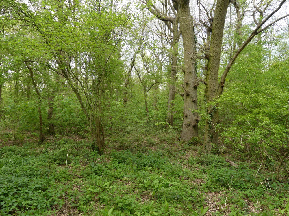Pintail Wood, Eakring, near Mansfield and Newark in the county of Nottinghamshire.  2.74 acres of broadleaved woodland for £36,000 (freehold)