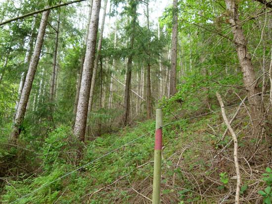 Woodland For Sale Tall Firs Wood Near Llangollen