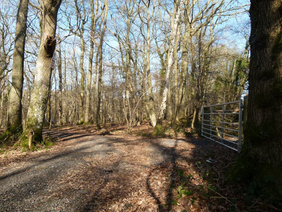 Woodland for sale dew wood near ashurst wood east sussex for Design of ash pond